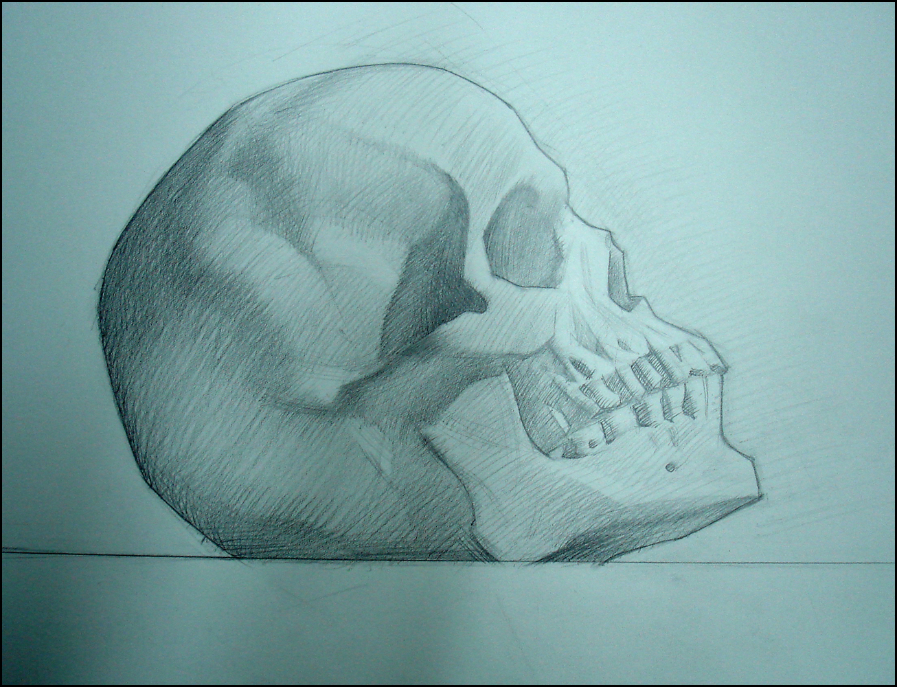 Skull in Profile, pencil on paper, 9x12 inches
